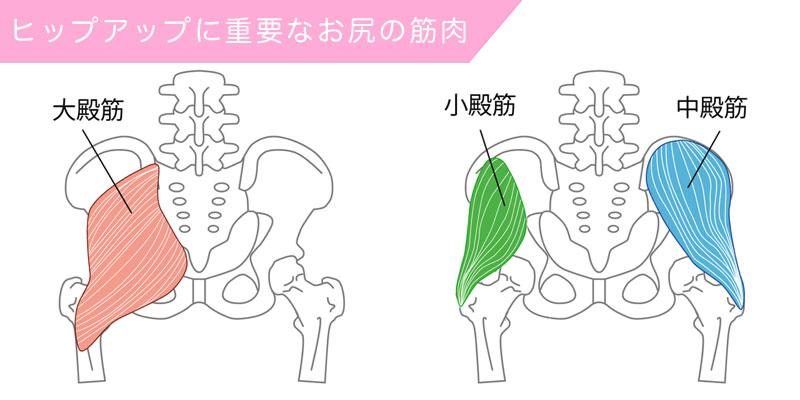 ヒップアップに関連のある筋肉の大殿筋・中殿筋・小殿筋