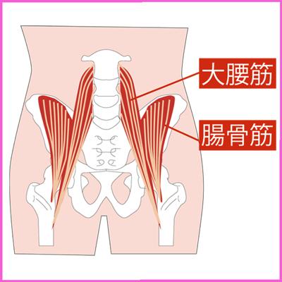 腸腰筋( 大腰筋と腸骨筋 )の図解