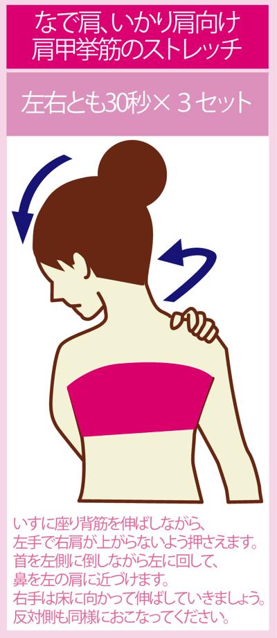 肩甲拳筋のストレッチでいかり肩となで肩の改善