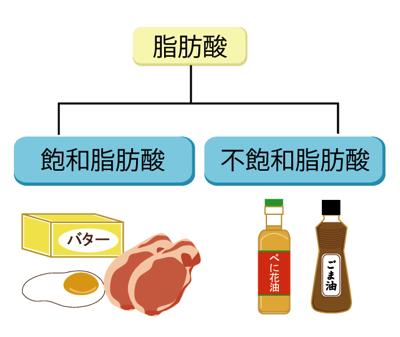 脂肪酸の分類ー飽和脂肪酸と不飽和脂肪酸について