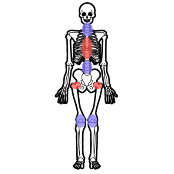 動くべき関節と、動かない方がいい関節の代表例を図解