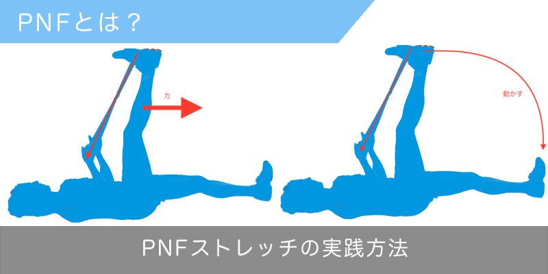 pnfストレッチ