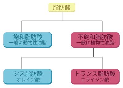 トランス脂肪酸の分類
