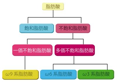 脂肪酸の概要図