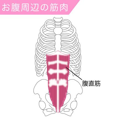腹直筋の筋肉図