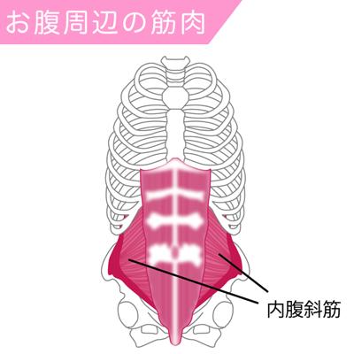 内腹斜筋の筋肉図