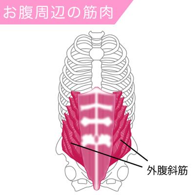 外腹斜筋の筋肉図