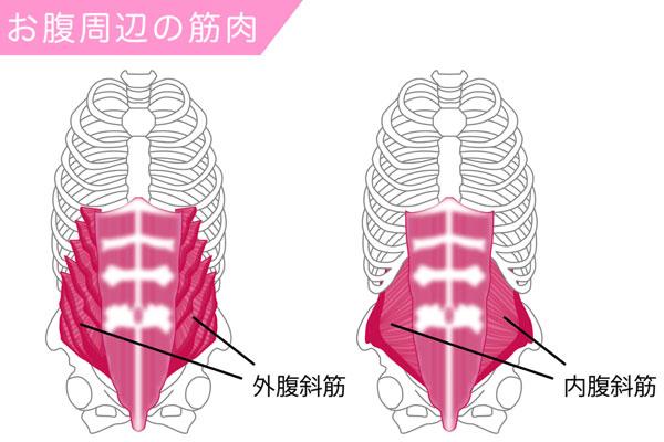 腹斜筋(外腹斜筋と内腹斜筋)の図解
