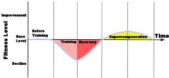トレーニングの効率と超回復