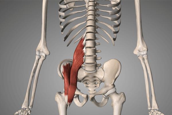 腰痛と関わりの深い筋肉:腸腰筋